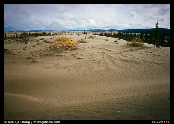 Dune field with boreal forest in the distance. Kobuk Valley National Park (color)