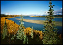 Kobuk river and sand bar seen through Spruce trees. Kobuk Valley National Park ( color)