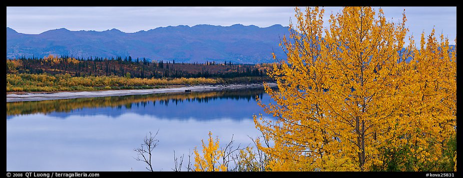 River scene with tree in fall foliage. Kobuk Valley National Park (color)