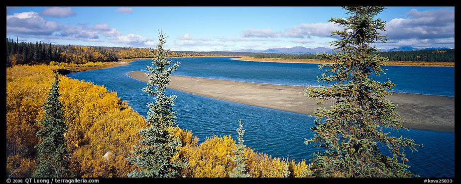 Northern river scenery seen through spruce trees. Kobuk Valley National Park (color)