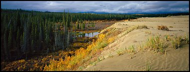 Sand dunes and boreal forest. Kobuk Valley National Park (Panoramic color)