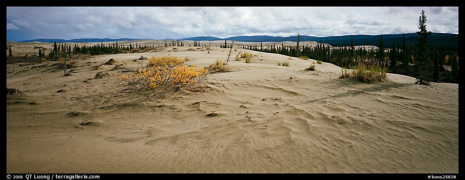 Arctic sand dune landscape. Kobuk Valley National Park (color)