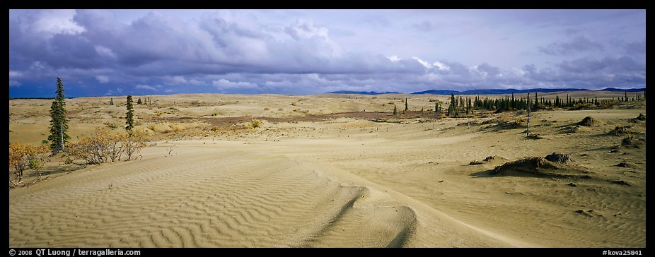 Sand dunes with spruce trees. Kobuk Valley National Park (color)