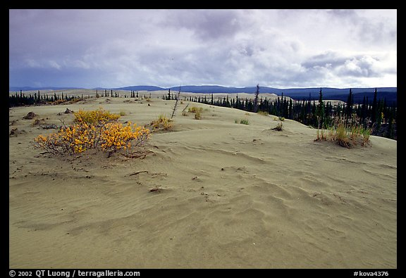 Great Sand Dunes and boreal spruce forest. Kobuk Valley National Park (color)