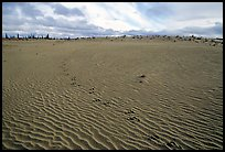 Caribou tracks and ripples in the Great Sand Dunes. Kobuk Valley National Park, Alaska, USA. (color)
