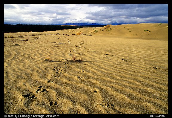 Caribou footprints and ripples in the Great Sand Dunes. Kobuk Valley National Park (color)