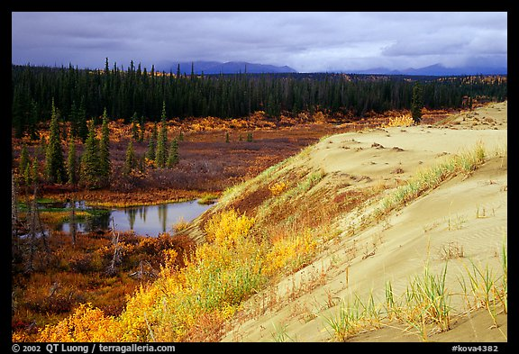 Edge of the Great Sand Dunes with tundra and taiga below. Kobuk Valley National Park, Alaska, USA.