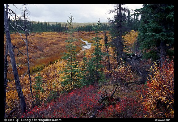 Autumn colors on boreal forest, Kavet Creek. Kobuk Valley National Park (color)