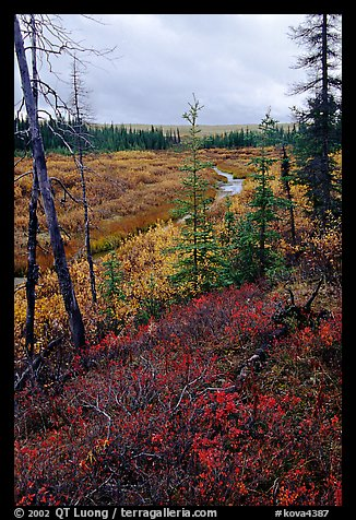 Autumn colors on Kavet Creek near the Great Sand Dunes. Kobuk Valley National Park (color)
