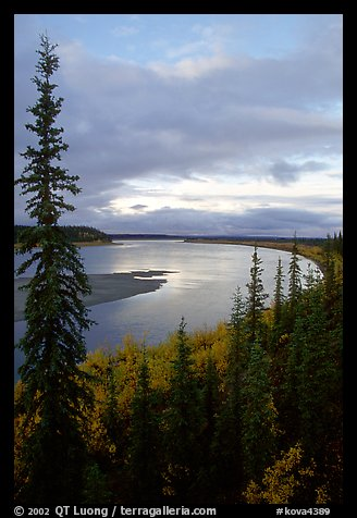 Boreal trees and bend of the Kobuk River, evening. Kobuk Valley National Park (color)