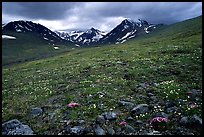 Green valley with alpine wildflowers and snow-clad peaks. Lake Clark National Park, Alaska, USA.
