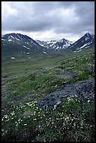 Valley with wildflowers, between Turquoise Lake and Twin Lakes. Lake Clark National Park, Alaska, USA. (color)