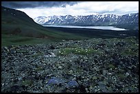 Tundra with forget-me-nots and Twin Lakes. Lake Clark National Park, Alaska, USA.