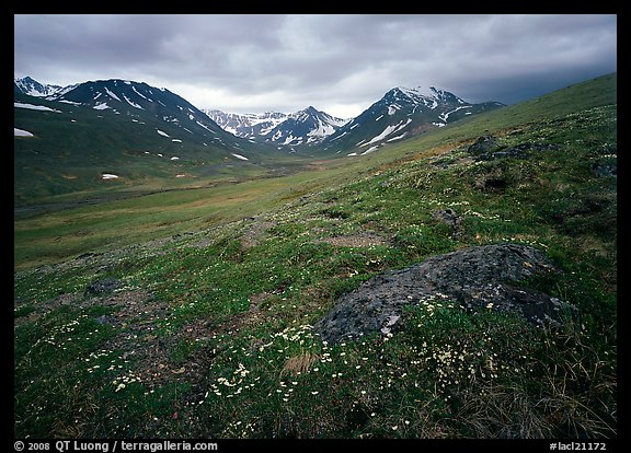 Wildflowers, valley and mountains. Lake Clark National Park (color)