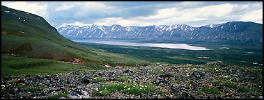 Tundra flowers with distant lake and mountains. Lake Clark National Park (Panoramic color)
