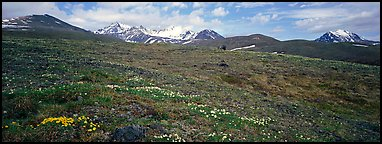 Wildflowers, tundra, and mountains. Lake Clark National Park (Panoramic color)