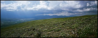 Tundra wildflowers under storm clouds. Lake Clark National Park (Panoramic color)