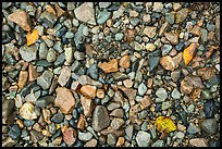 Close up of pebbles and fallen leaves on shore of Lake Clark. Lake Clark National Park ( color)