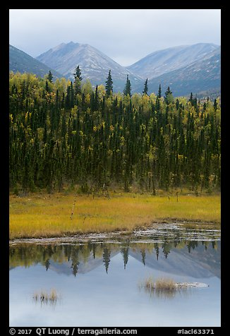 Beaver Pond in autumn. Lake Clark National Park (color)