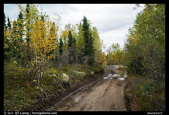 Dirt road near Port Alsworth. Lake Clark National Park (color)