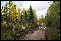 Dirt road near Port Alsworth. Lake Clark National Park ( color)