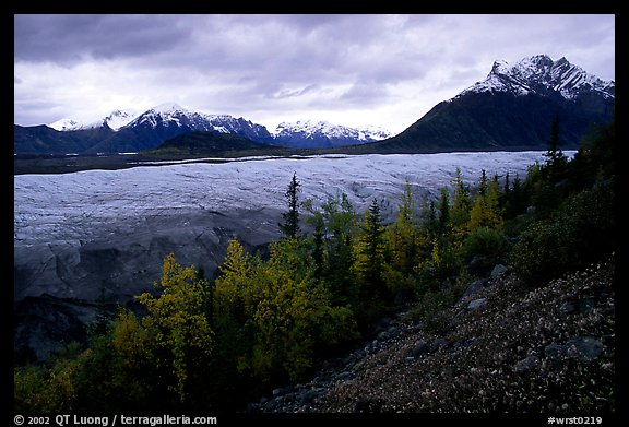 Fall colors, Mt Donoho above Root glacier. Wrangell-St Elias National Park (color)