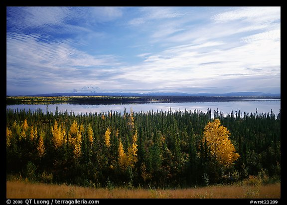 Forest, Willow Lake, and Wrangell range in the distance. Wrangell-St Elias National Park (color)