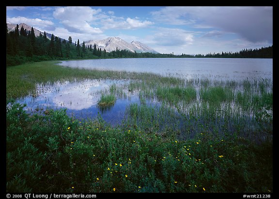 Wildflowers, reeds, and lake at the base of Mt Donoho. Wrangell-St Elias National Park (color)