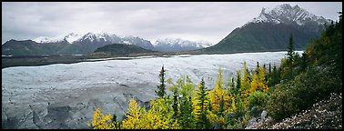 Mountain landscape with trees in fall color and glacier. Wrangell-St Elias National Park, Alaska, USA.