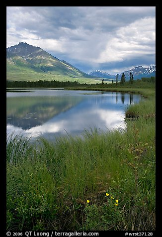 Flowers, grasses, lake, and mountains. Wrangell-St Elias National Park (color)