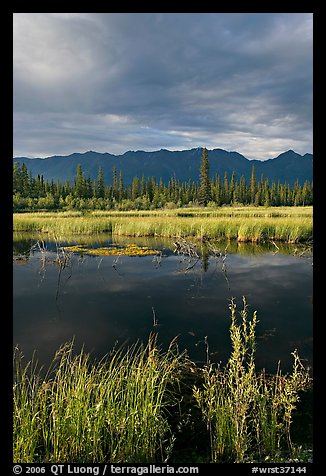 Pond, tundra and mountains. Wrangell-St Elias National Park, Alaska, USA.