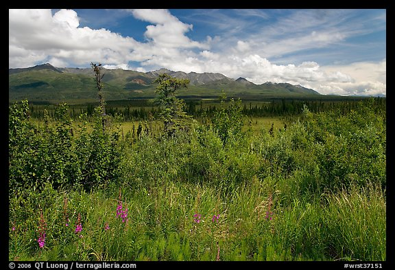 Lowland tundra, and Mentasta Mountains. Wrangell-St Elias National Park (color)