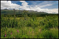 Lowland tundra, and Mentasta Mountains. Wrangell-St Elias National Park, Alaska, USA.