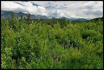 Tundra in summer and Nutzotin Mountains. Wrangell-St Elias National Park, Alaska, USA.