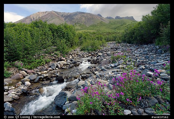 Fireweed, stream and Skookum Volcano. Wrangell-St Elias National Park (color)
