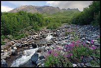 Fireweed, stream and Skookum Volcano. Wrangell-St Elias National Park, Alaska, USA.