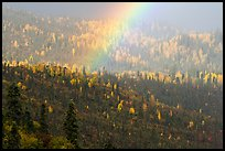 Rainbow over forest with autumn foliage. Wrangell-St Elias National Park ( color)