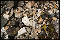 Ground close-up with blocks of limestone and marble, Nabesna mine. Wrangell-St Elias National Park ( color)
