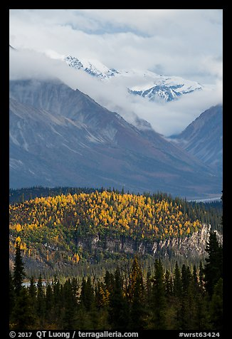 Snowy peaks emerging from clouds above hill with fall foliage. Wrangell-St Elias National Park (color)