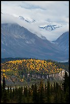 Snowy peaks emerging from clouds above hill with fall foliage. Wrangell-St Elias National Park ( color)