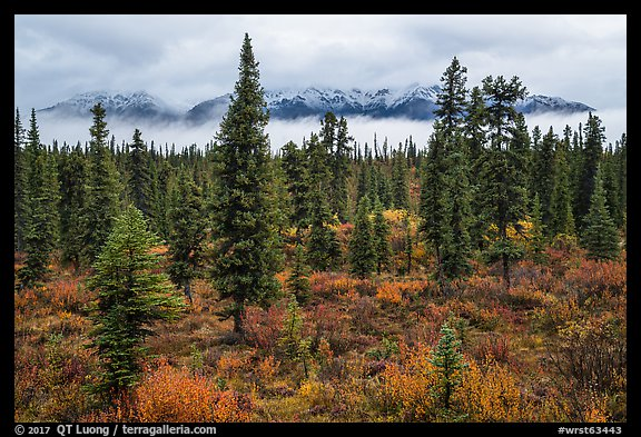 Mountains rising above clouds and fall foliage, Kendesnii. Wrangell-St Elias National Park (color)