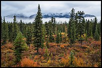Mountains rising above clouds and fall foliage, Kendesnii. Wrangell-St Elias National Park, Alaska, USA.