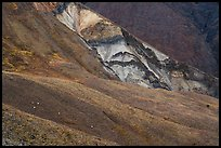 Dall sheep on hillsides, Skookum Volcano. Wrangell-St Elias National Park ( color)