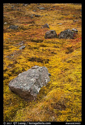 Rocks and tundra. Wrangell-St Elias National Park (color)