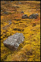 Rocks and tundra. Wrangell-St Elias National Park ( color)