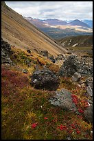 Landslide slope, tundra on Skookum Volcano. Wrangell-St Elias National Park ( color)