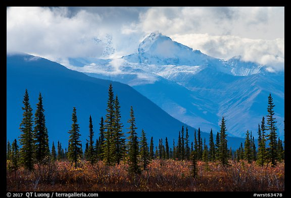 Spruce, tundra, Wrangell Mountains in autumn. Wrangell-St Elias National Park (color)