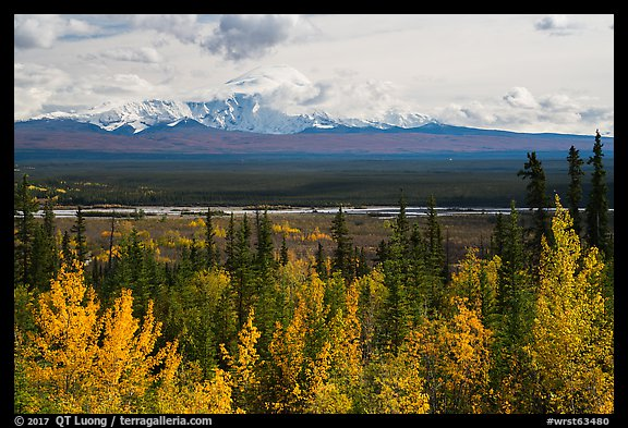 Trees in autumn foliage, Copper River, and Mount Blackburn. Wrangell-St Elias National Park (color)