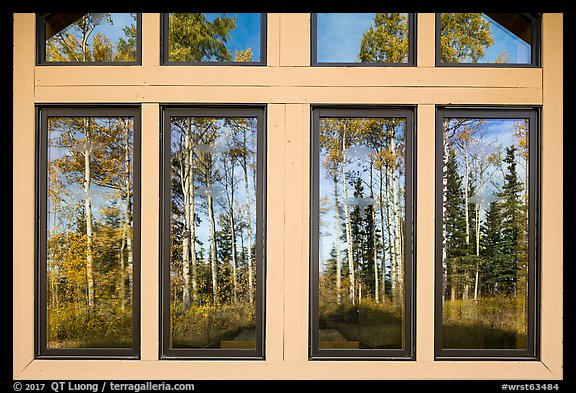 Aspens, Visitor Center window reflexion. Wrangell-St Elias National Park (color)
