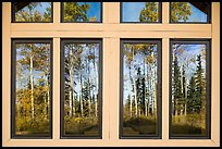 Aspens, Visitor Center window reflexion. Wrangell-St Elias National Park ( color)